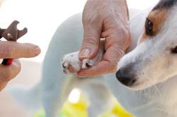 Conseils pour le toilettage de chats et chiens animadou - A quel age couper les griffes d un chat ...